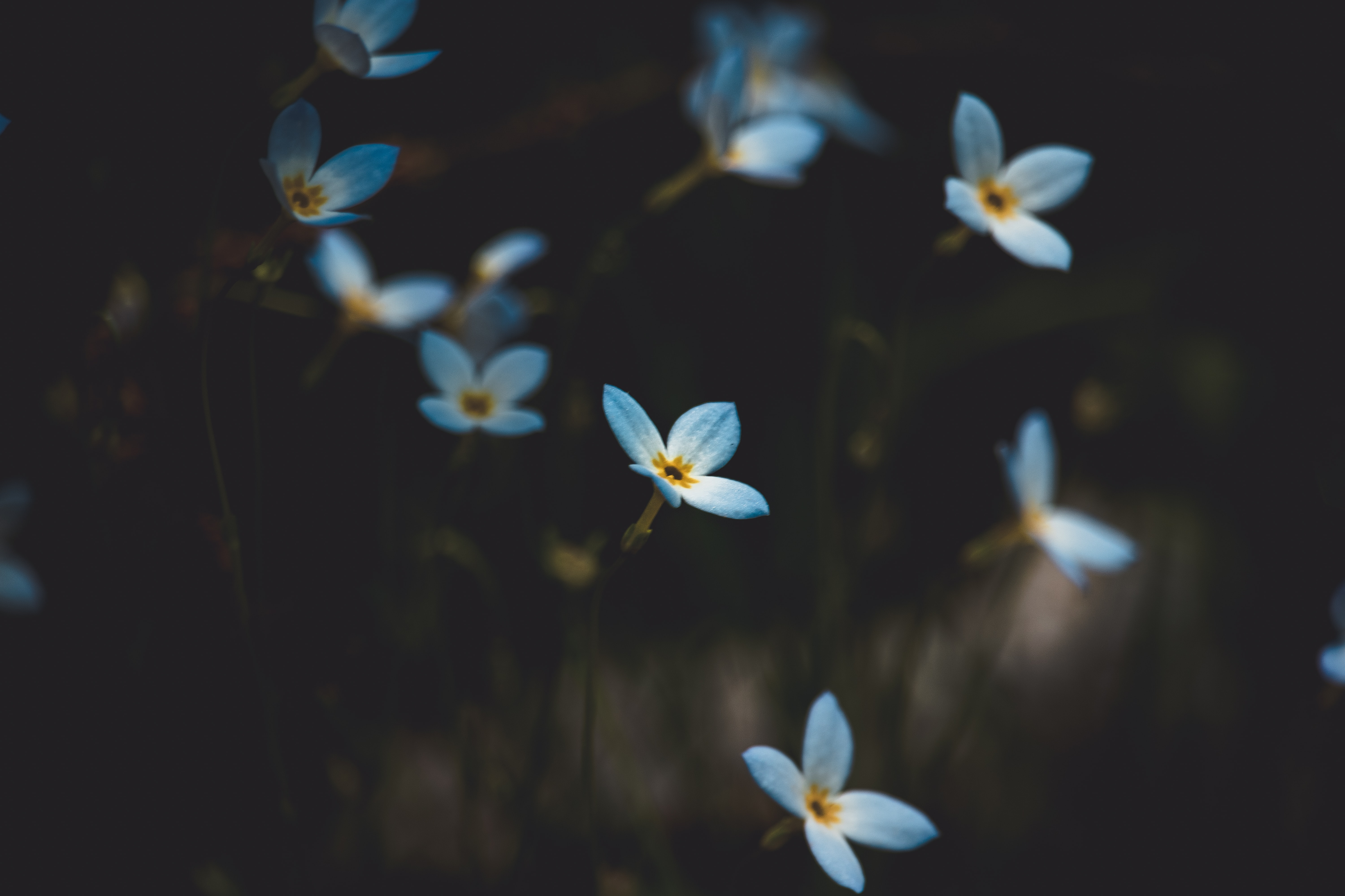 shallow focus photography of flowers