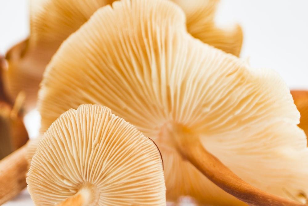 shallow focus of mushrooms