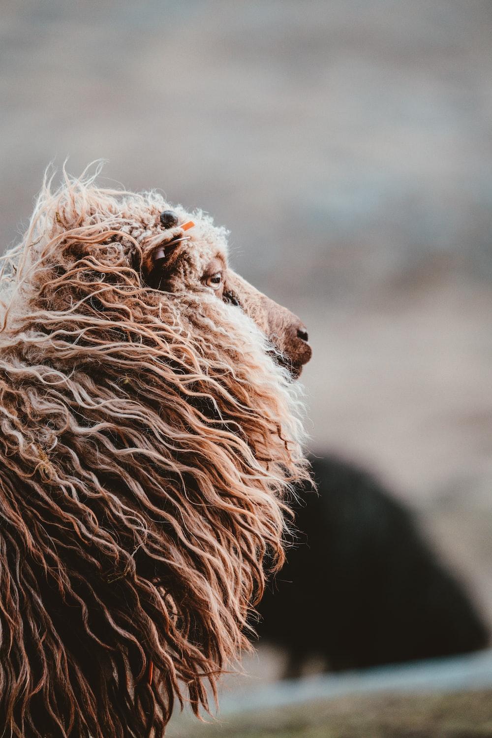 closeup photo of brown animal