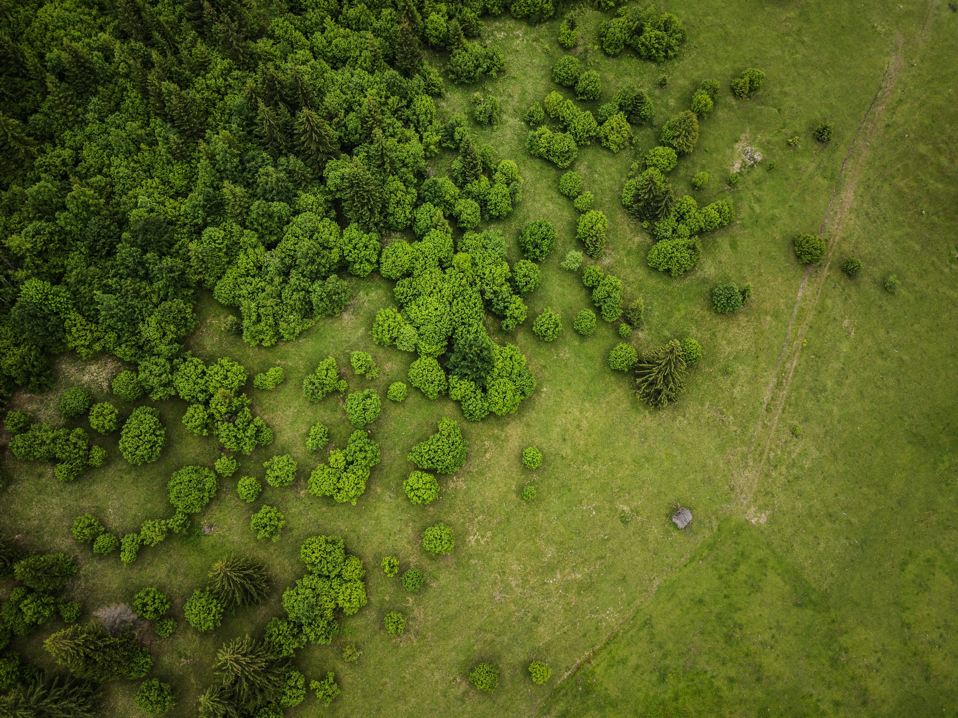 bird's-eye view photography of land with trees