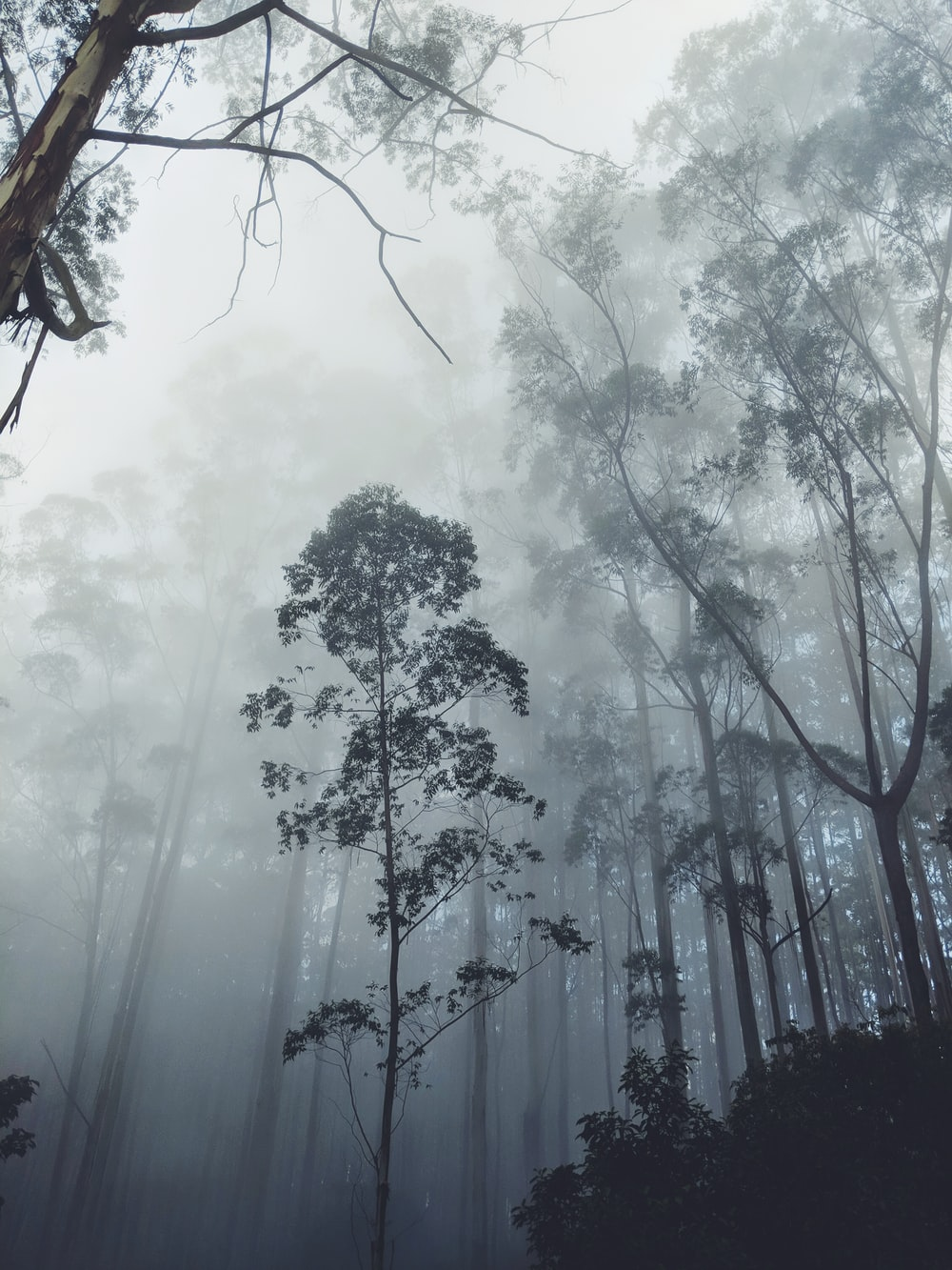silhouette photography of trees covered with mist