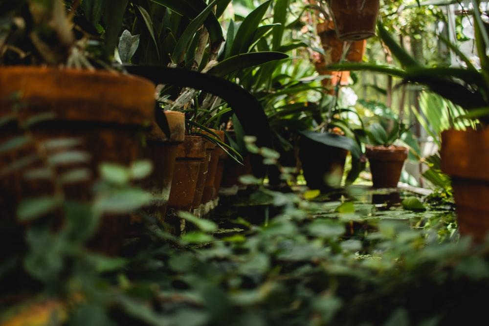 tilt shift photography of green plants