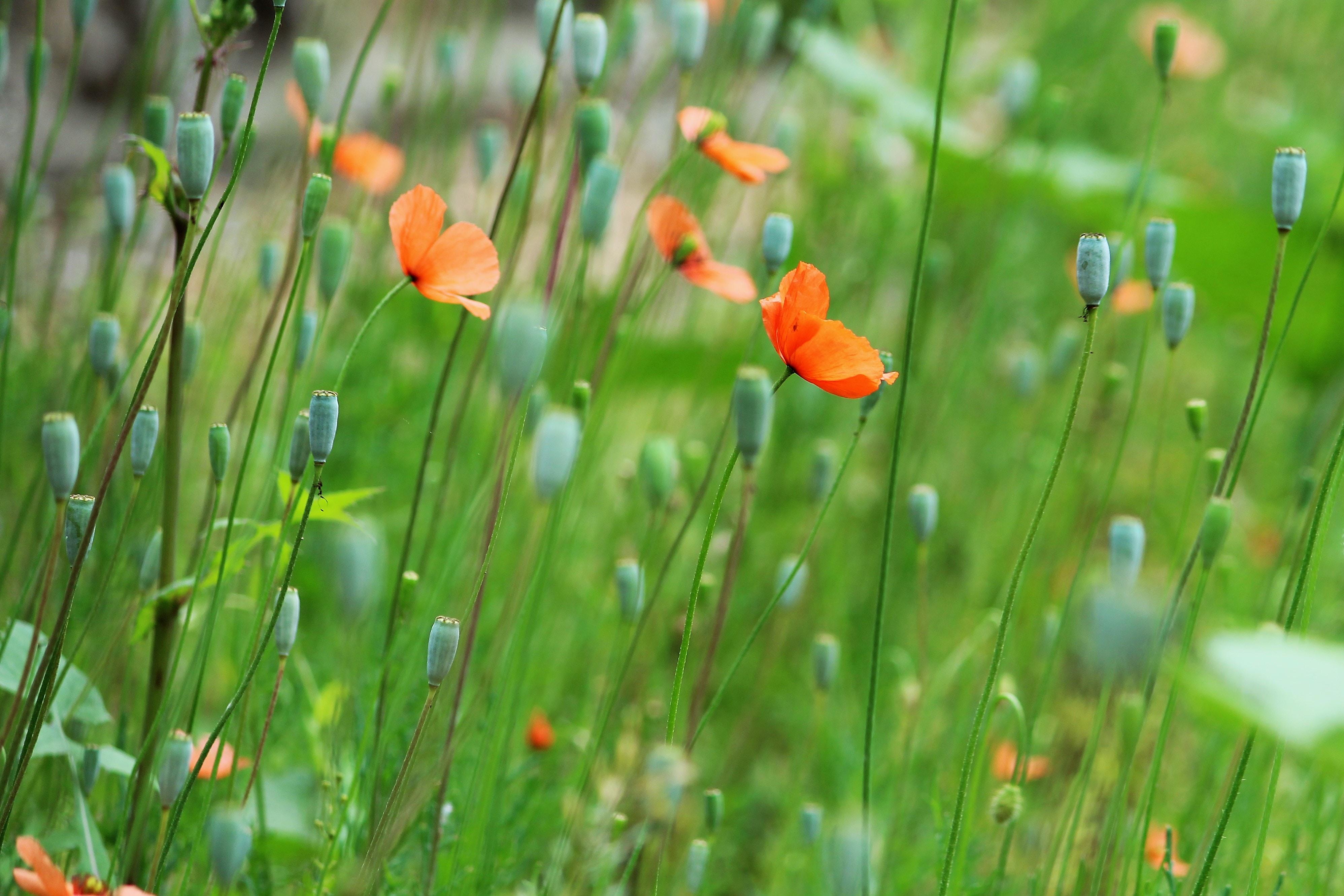 shallow focus photography of orange flowering plant