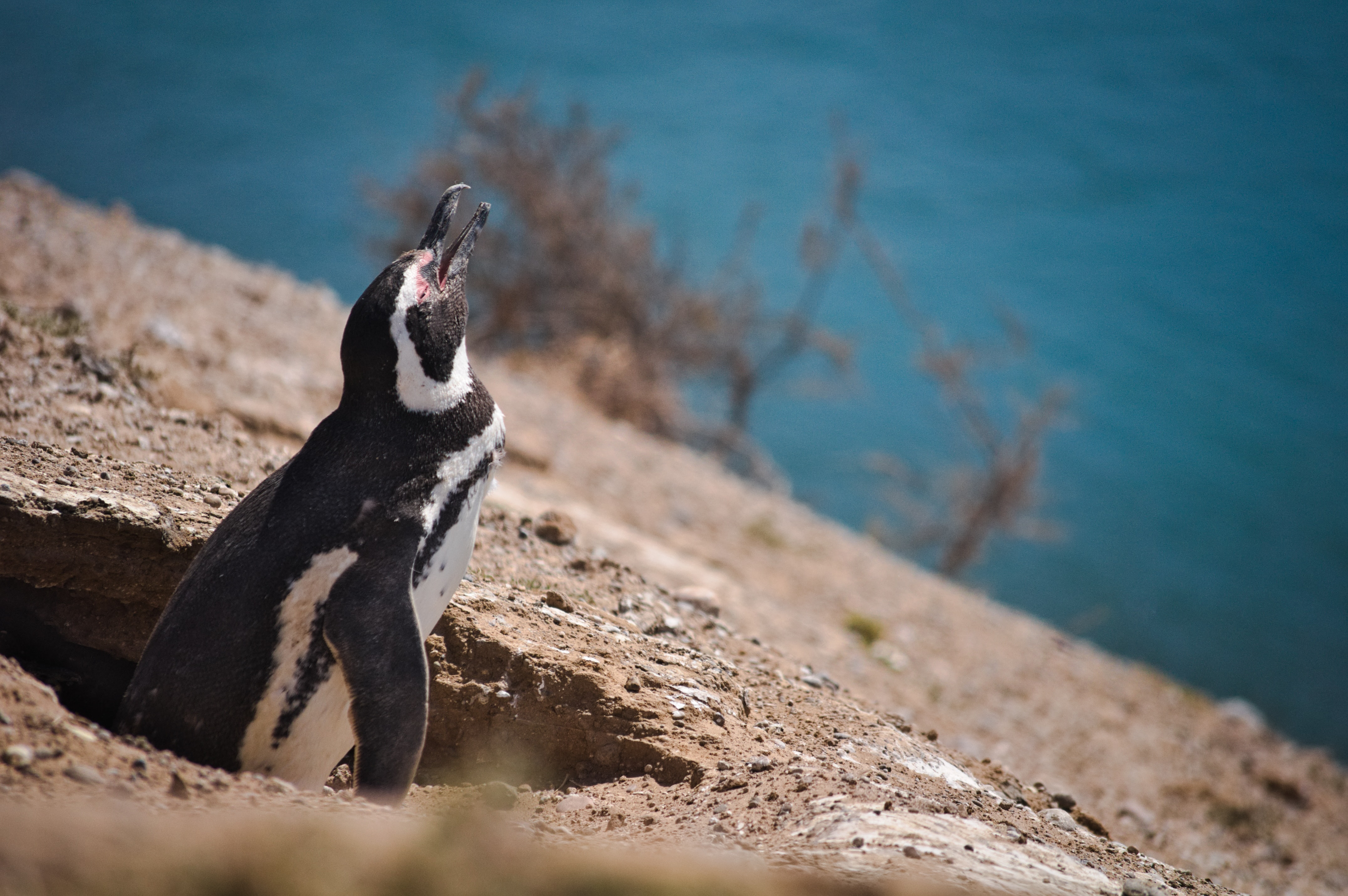 white and black penguin looking up during daytime