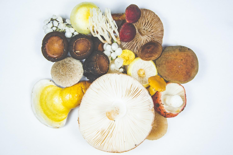 colorful kinds of mushroom