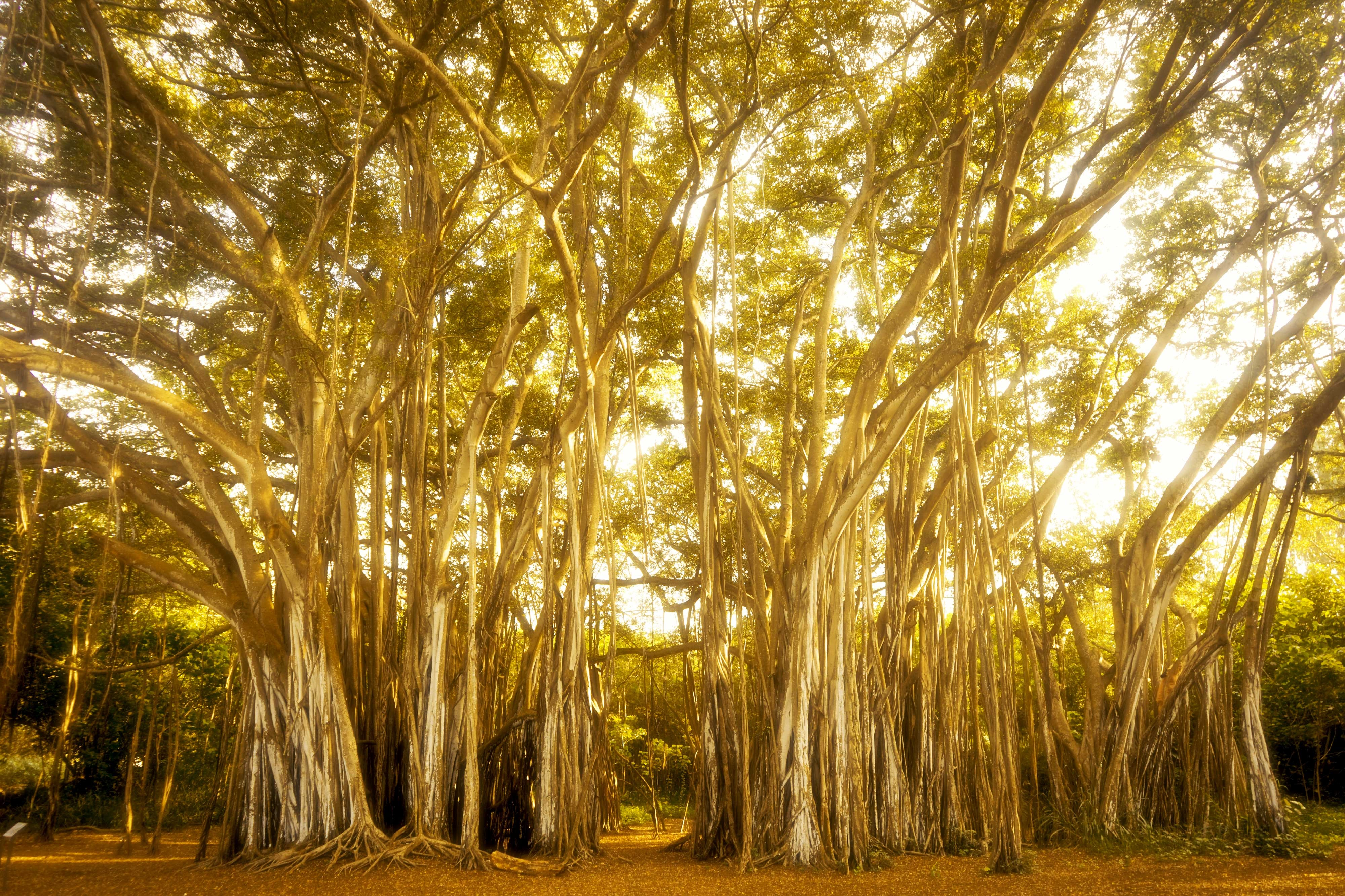golden hour photography of trees