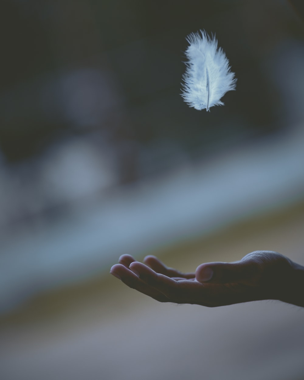 shallow focus photography of white feather dropping in person's hand
