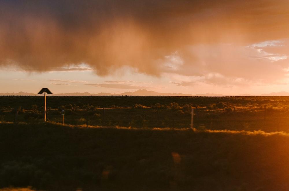 grass field taken during golden hour