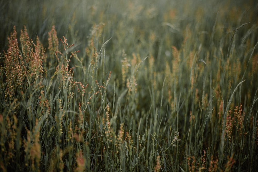 green leafed grass photography