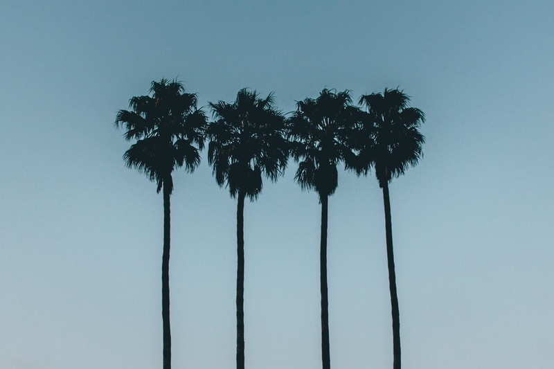 silhouette photo of four palm trees