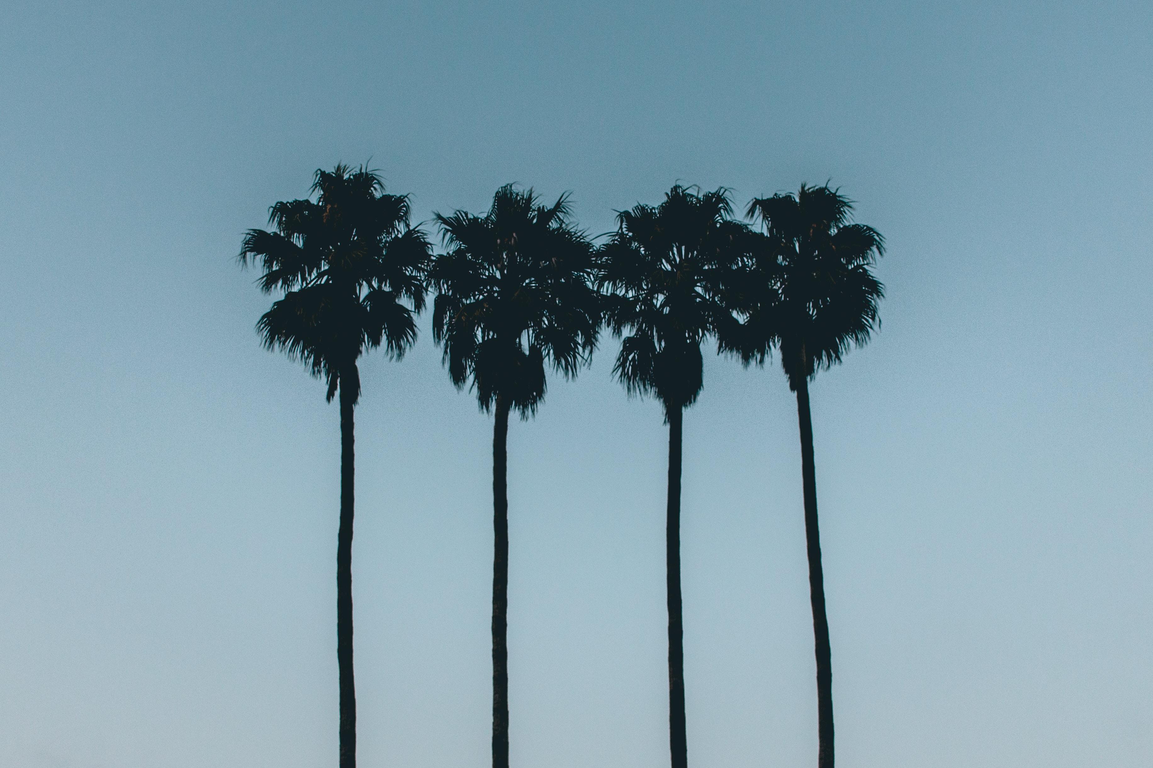 Summer Quartet. four stories