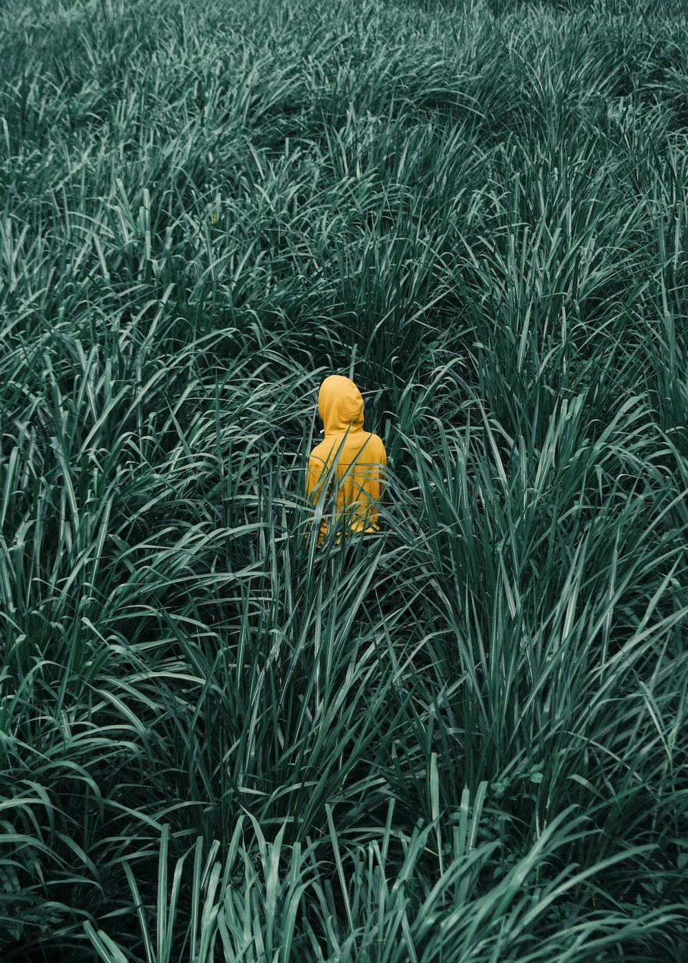 person wearing orange hooded jacket in in green grass field