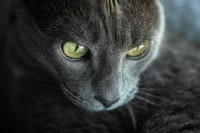 close-up photo of cat's face