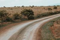 empty roadway near bushes