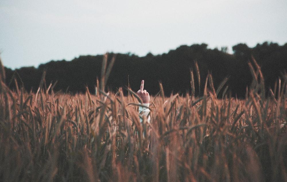 man hiding behind cattail plant