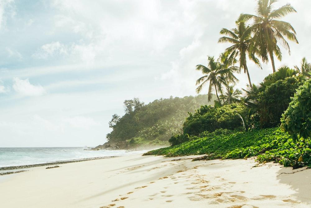 photography of foot tracks on seashore