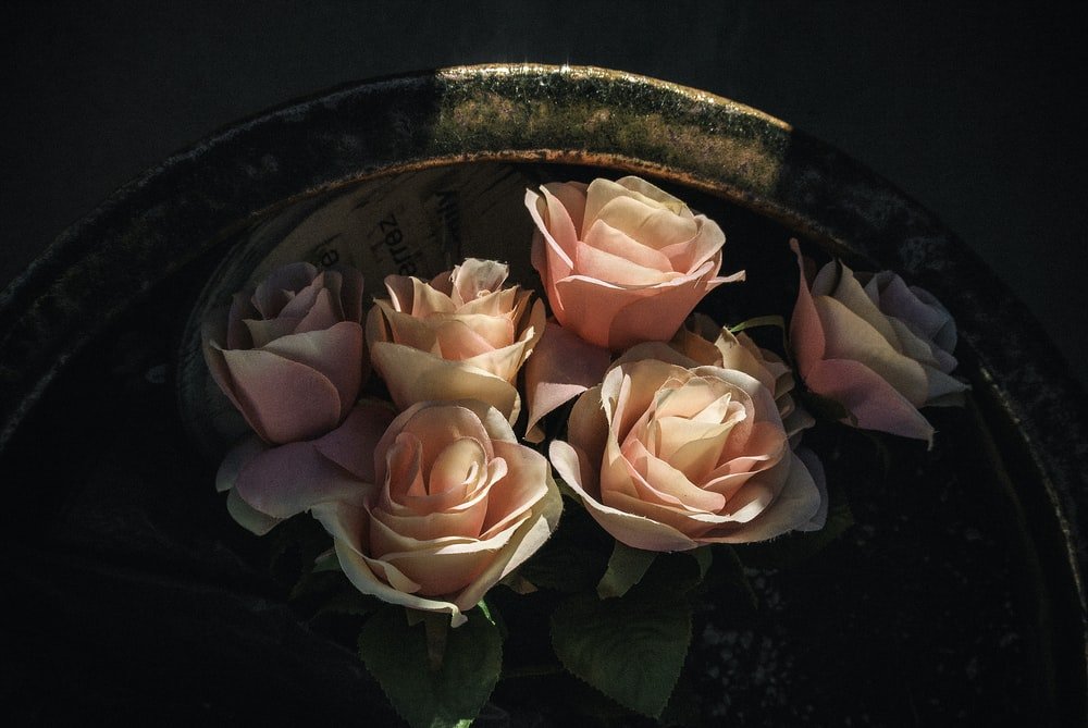 pink roses on brown ceramic pot