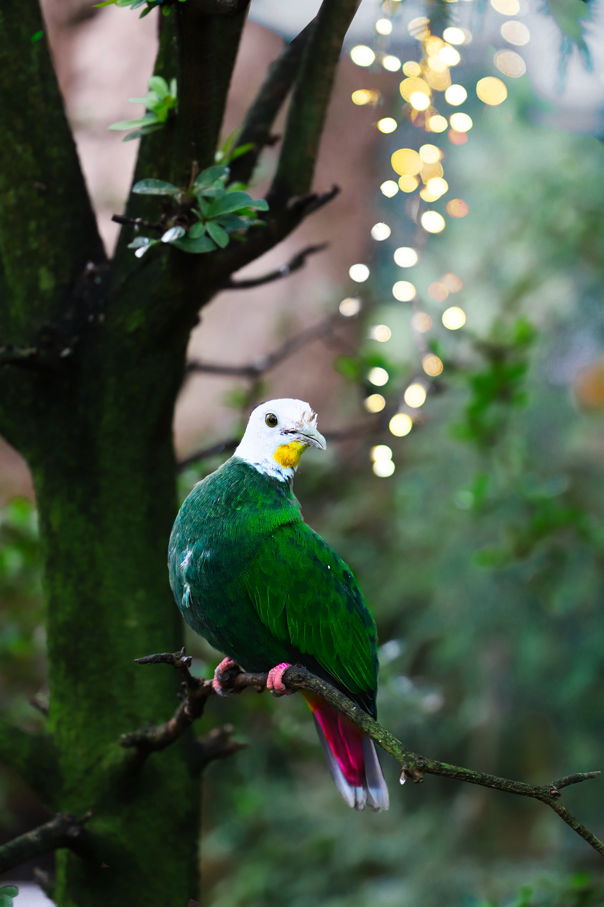 green and white bird on tree branch
