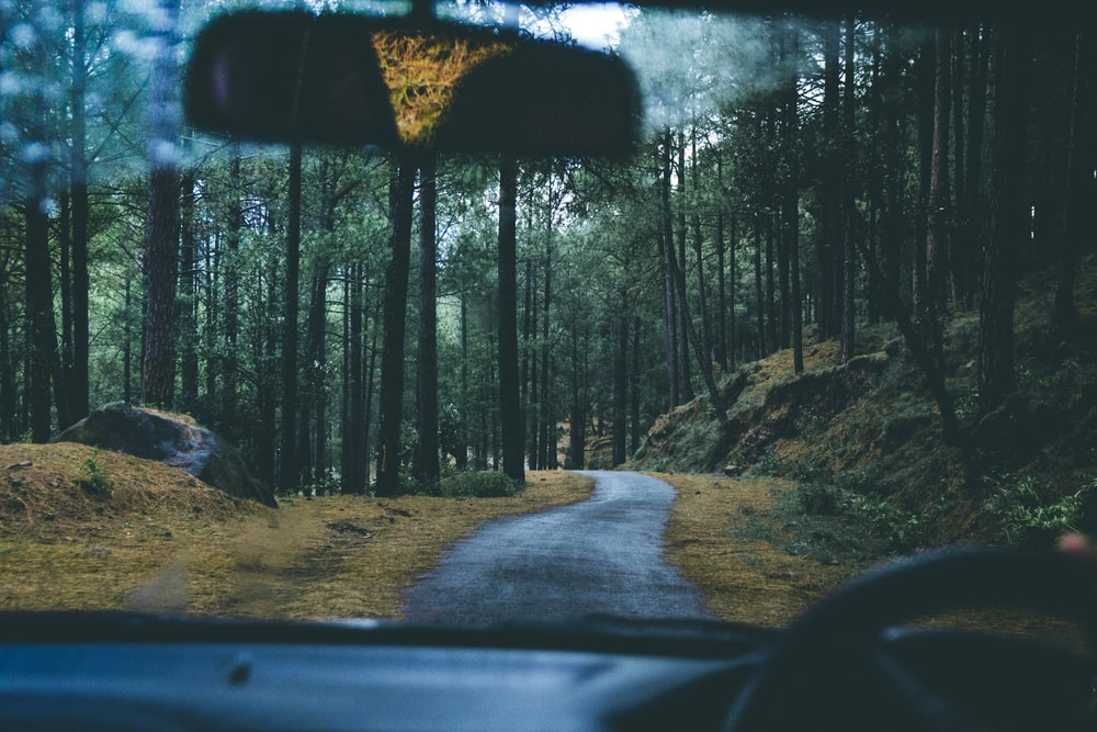 car front glass photo of road near trees