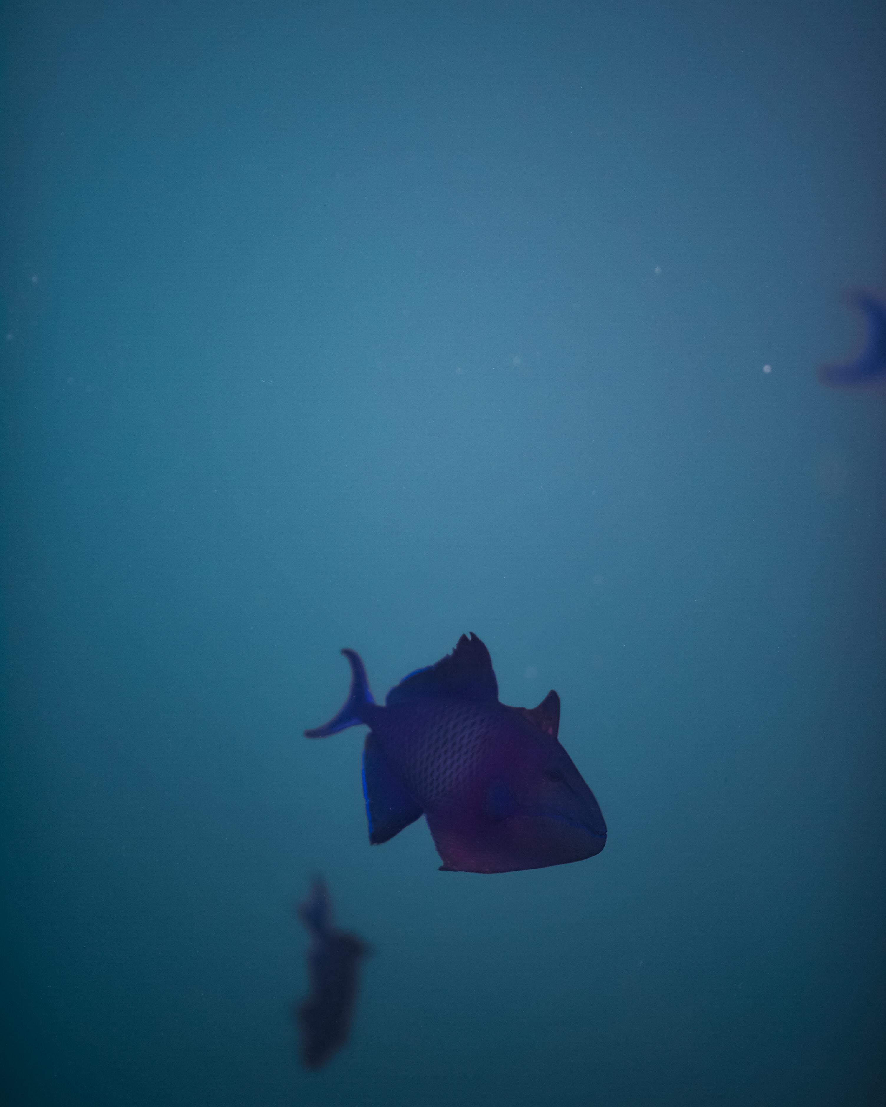 gray fish under water