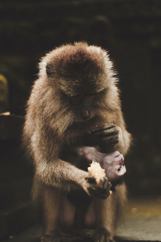 monkey holding food