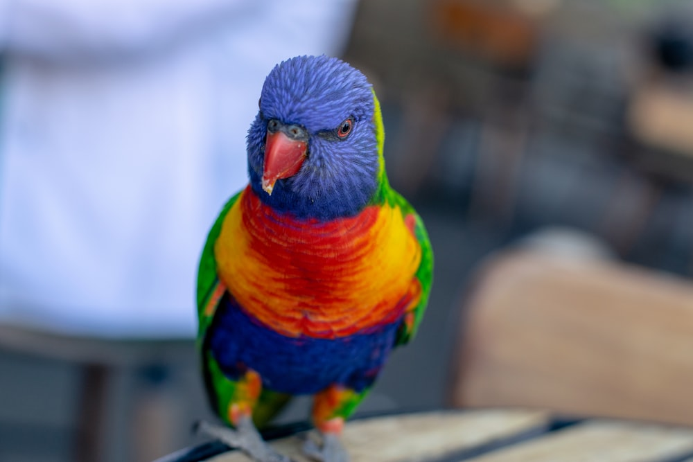shallow focus photography of birdf