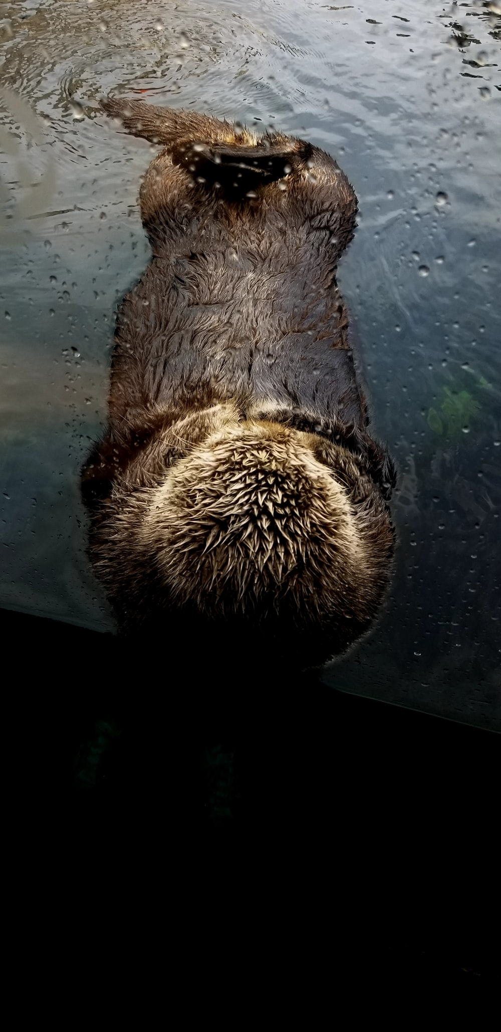 Sea Otter Pictures Download Free Images On Unsplash