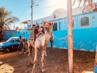 brown camel beside pole