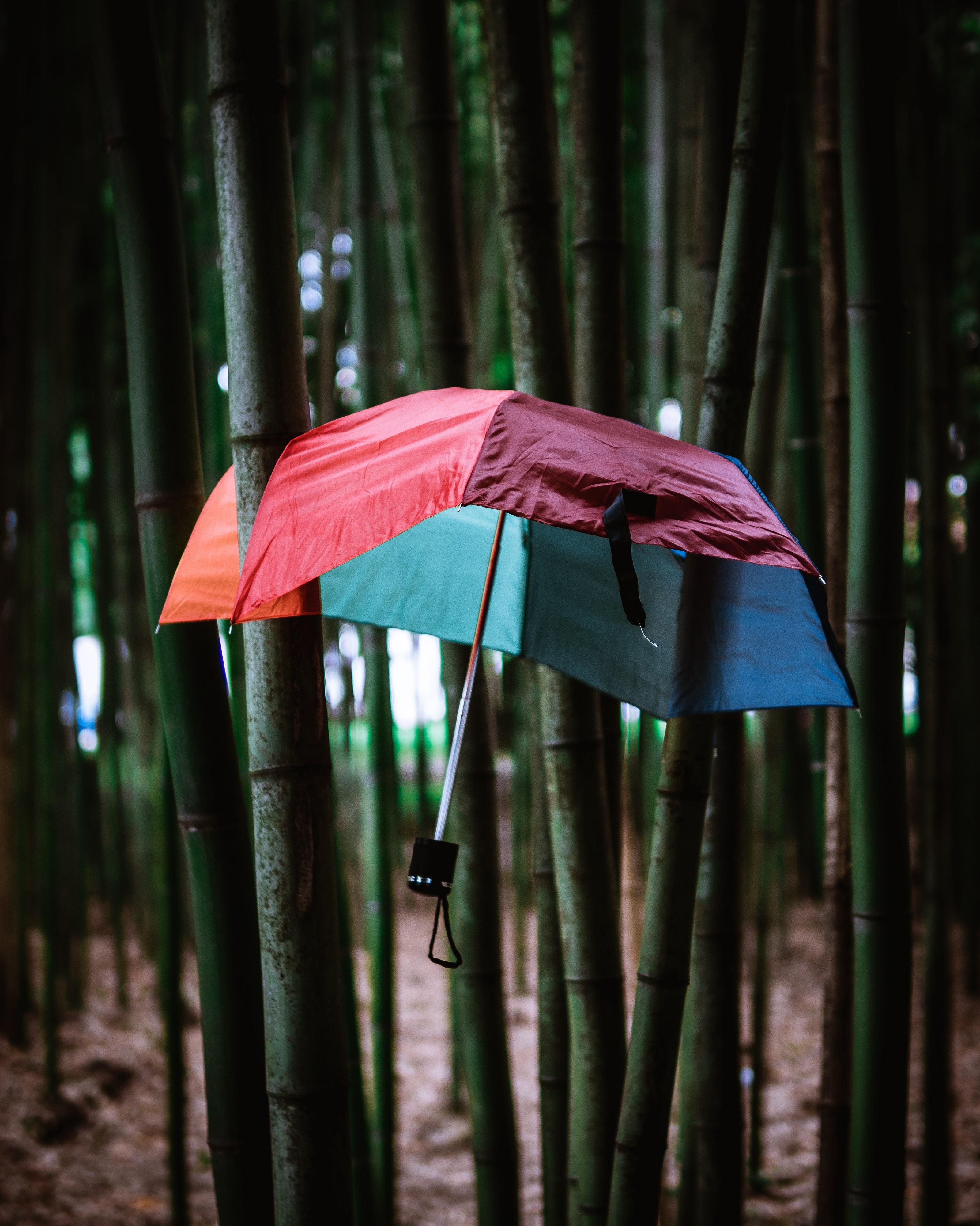 umbrella stocked on bamboo plants