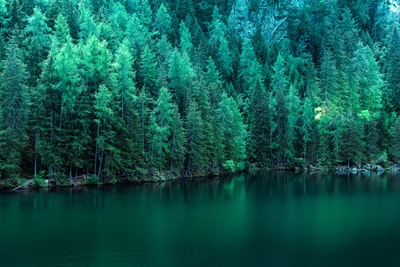 body of water surround by pine trees pine tree teams background