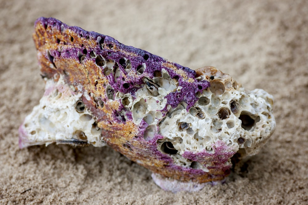 selective focus photography of a brown and purple stone