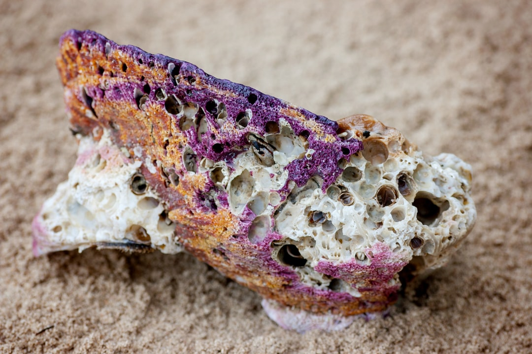 Empty colorful shell in the sand