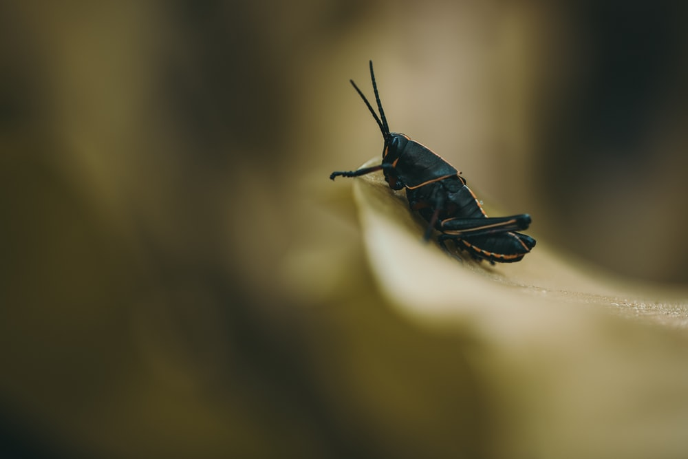 shallow focus photography of black cricket