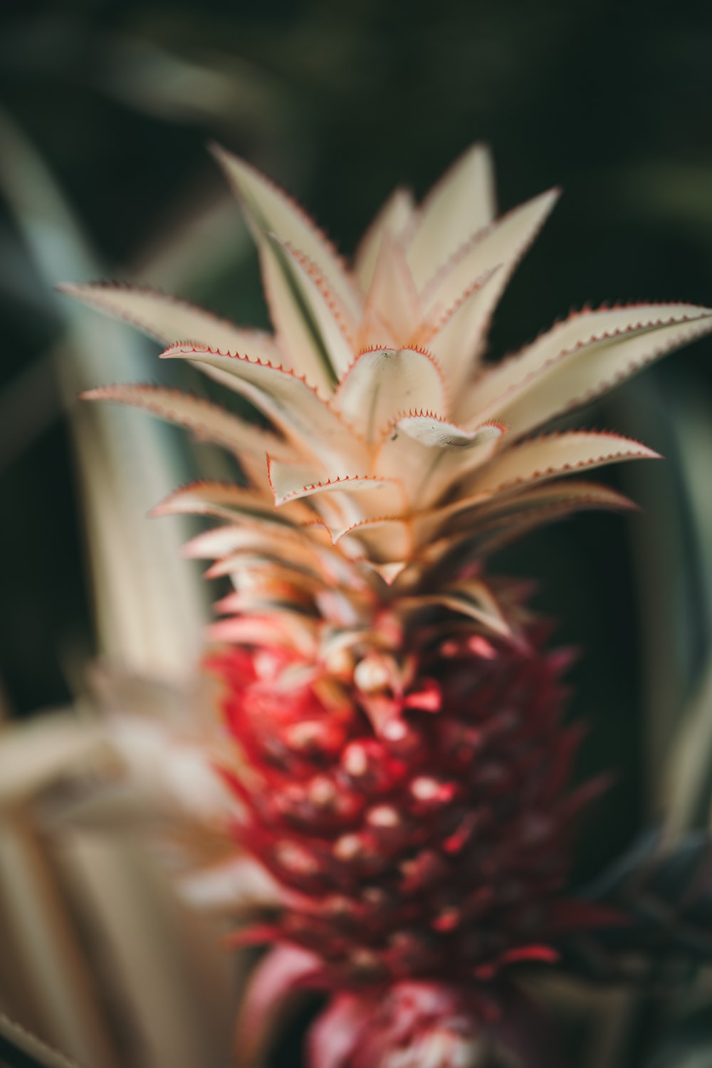 shallow focus photography of red pineapple