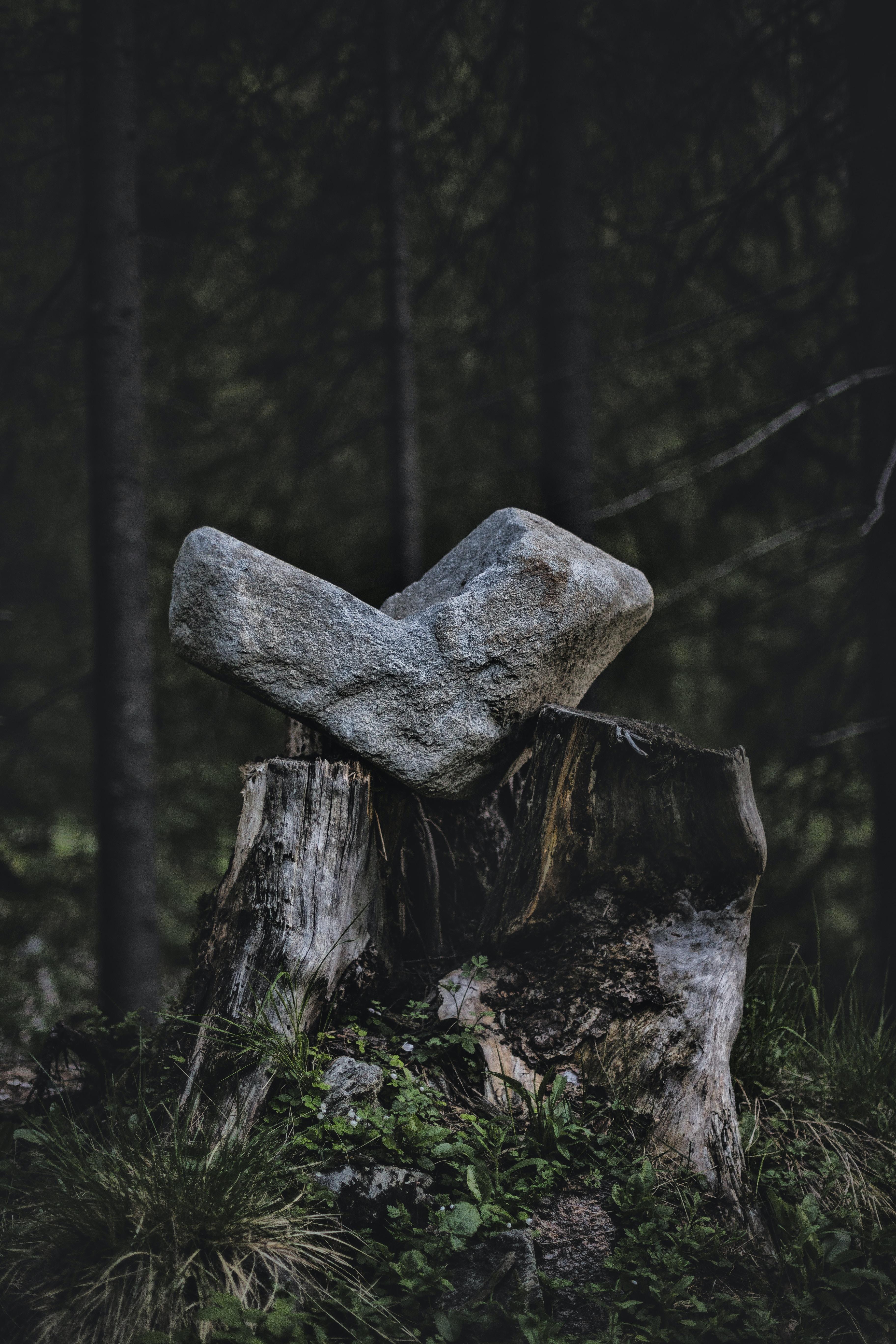 gray rock on tree stump
