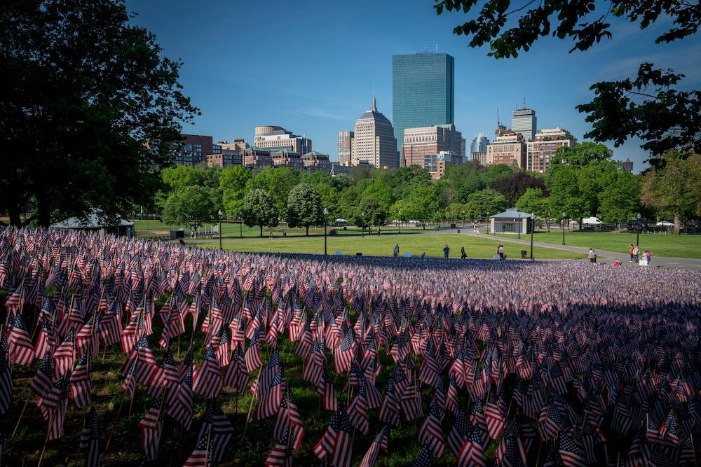 USA flag field near green trees