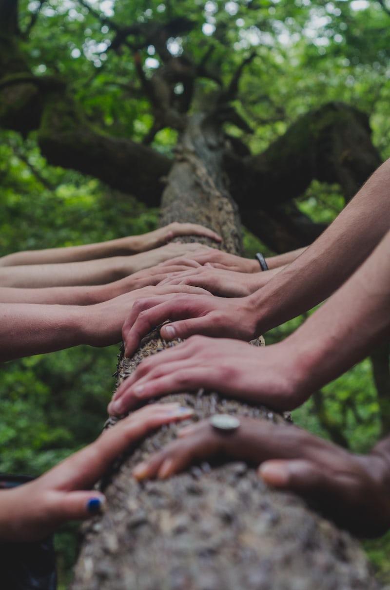 木の上に置かれた手
