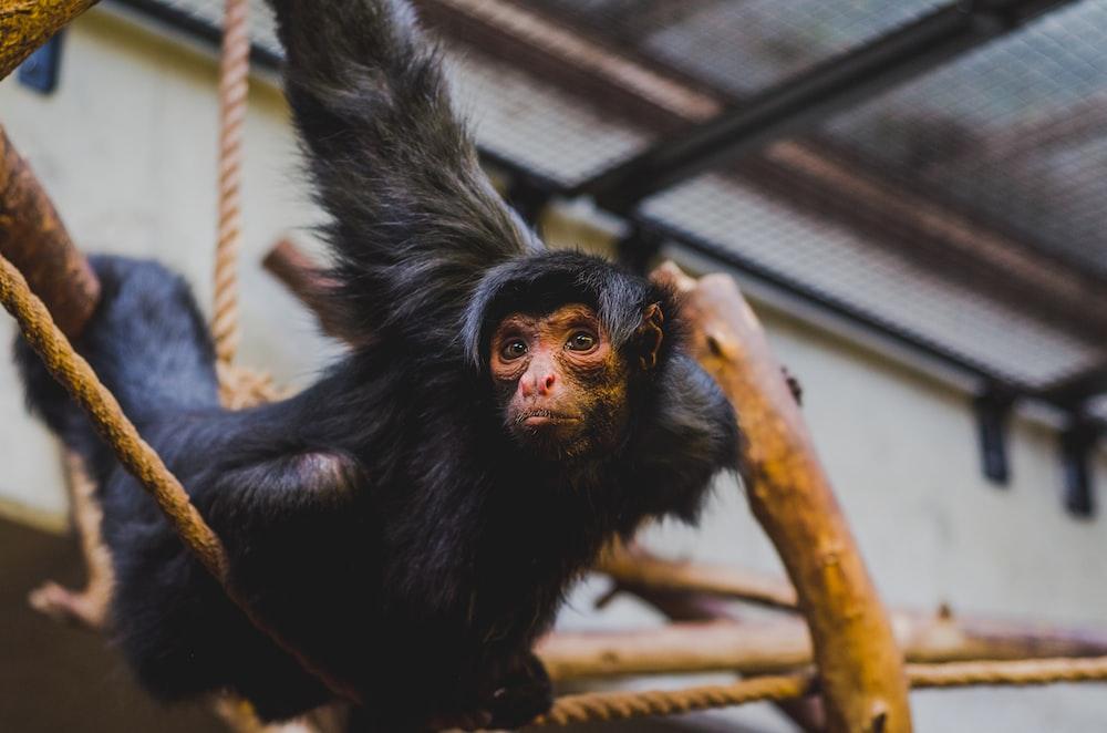 selective focus of climbing monkey