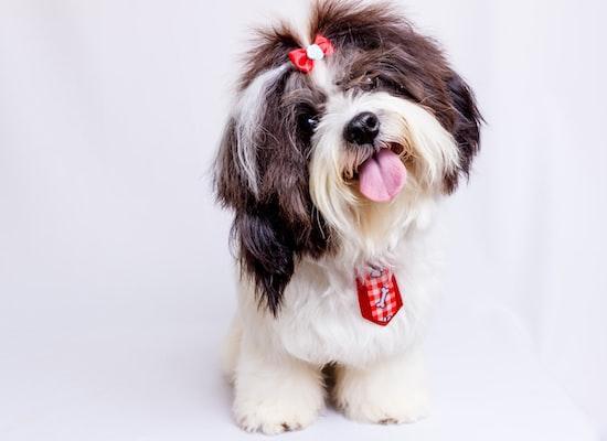 Transsylvania Pet Shop