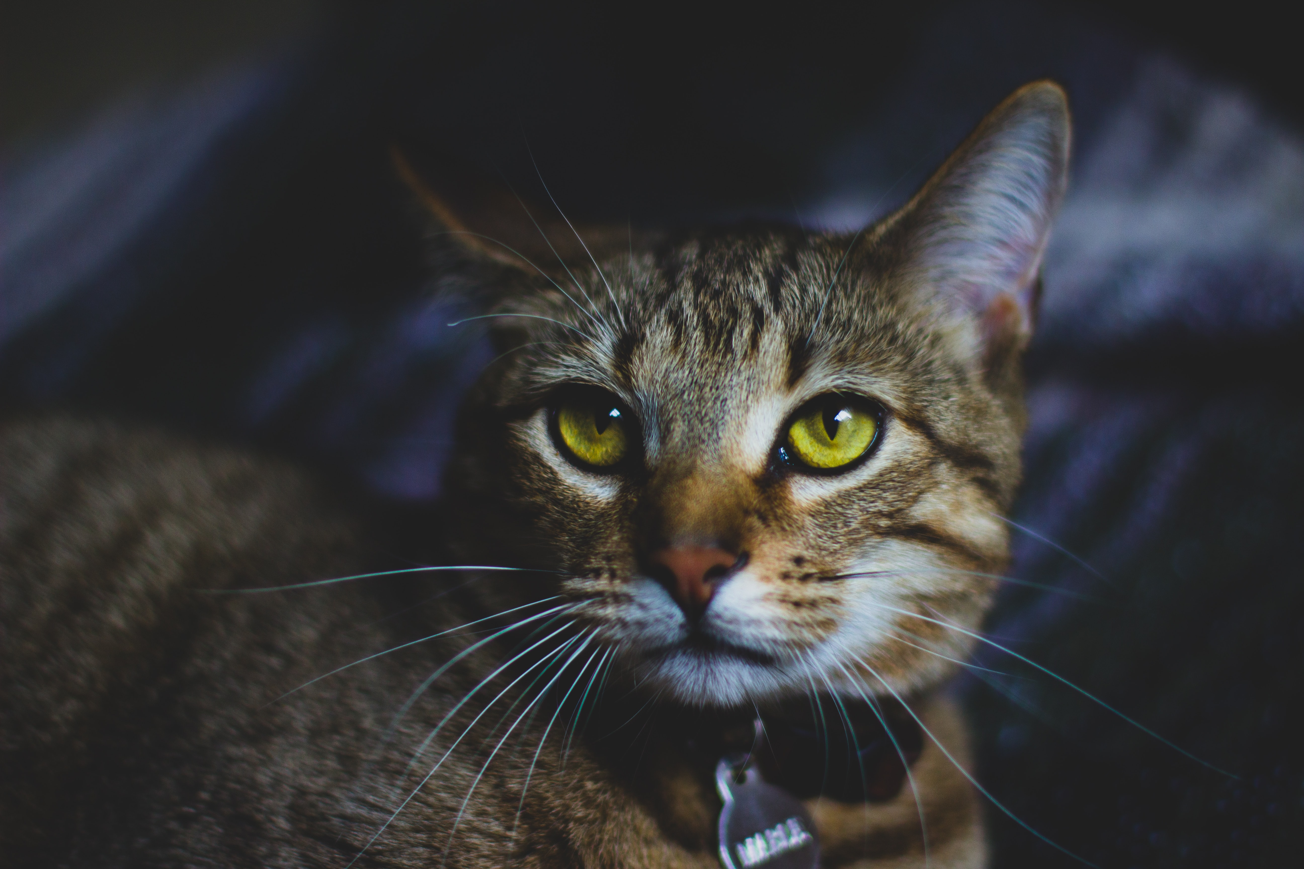 photo of brown tabby cat