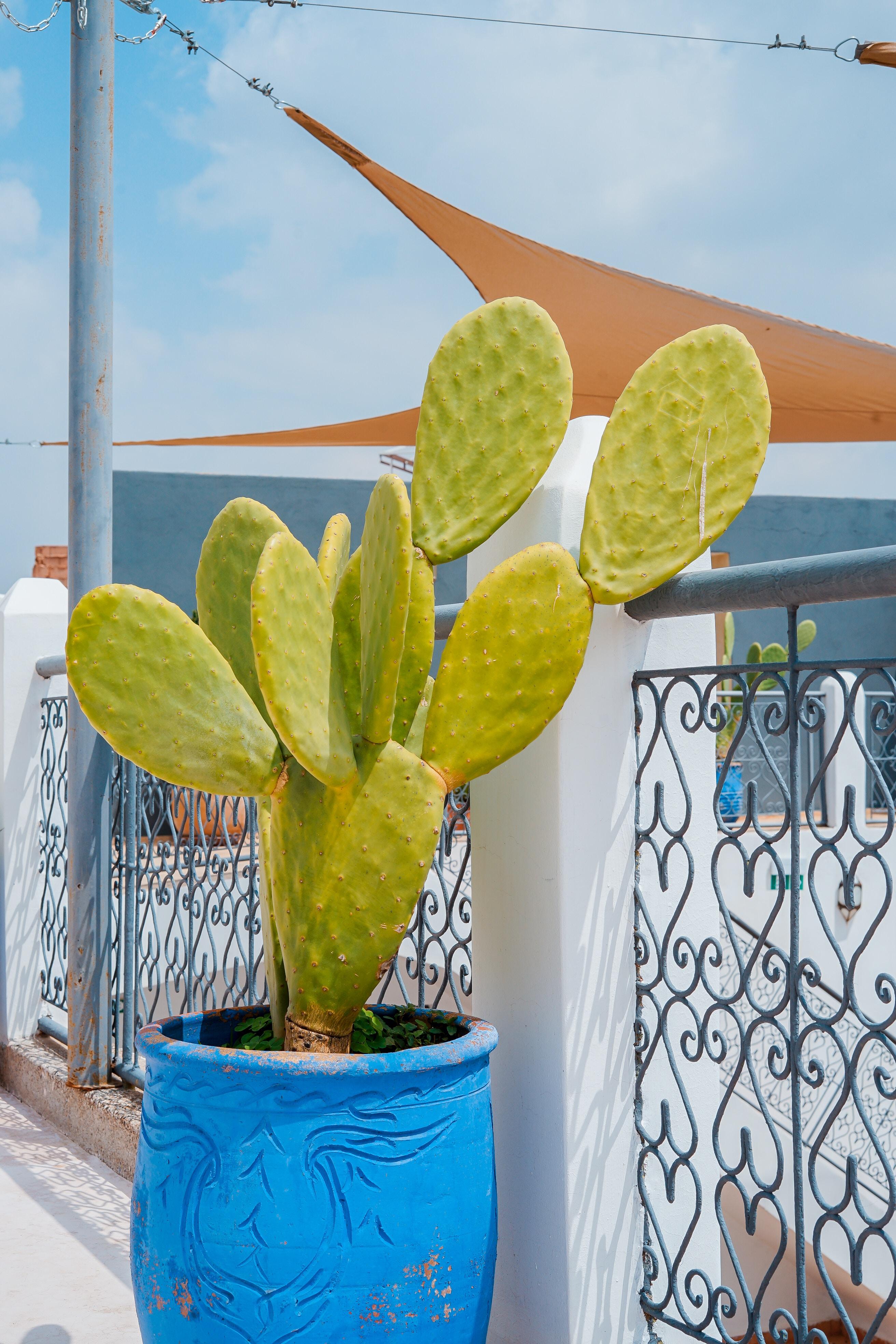 green cactus in blue pot near gate