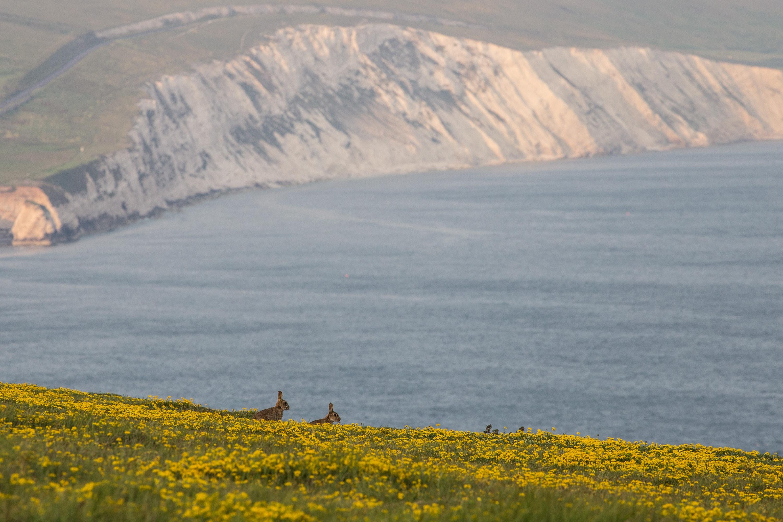 yellow flower field near body of water