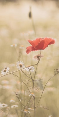 shallow focus photography of red flowering plant
