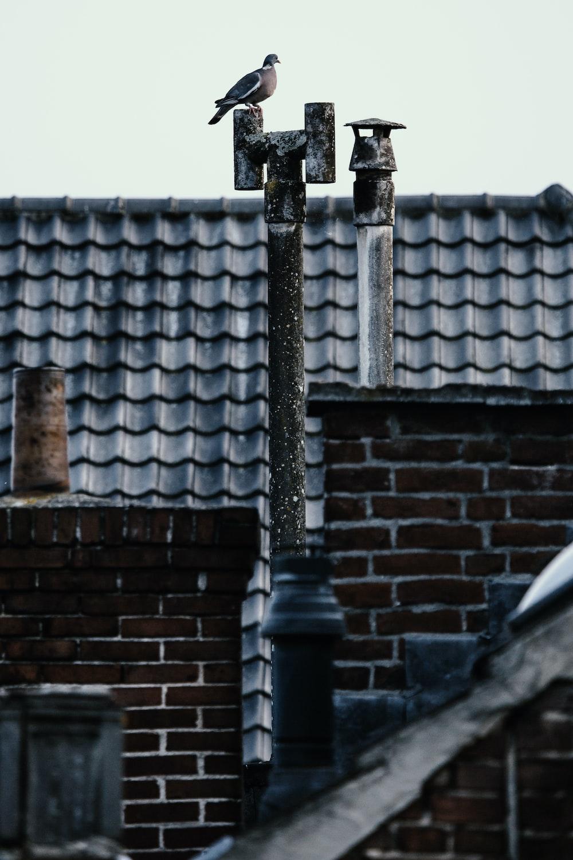 photo of bird near roof