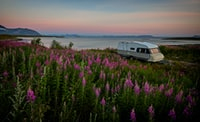 white and brown RV trailer near body of water and pink flowers