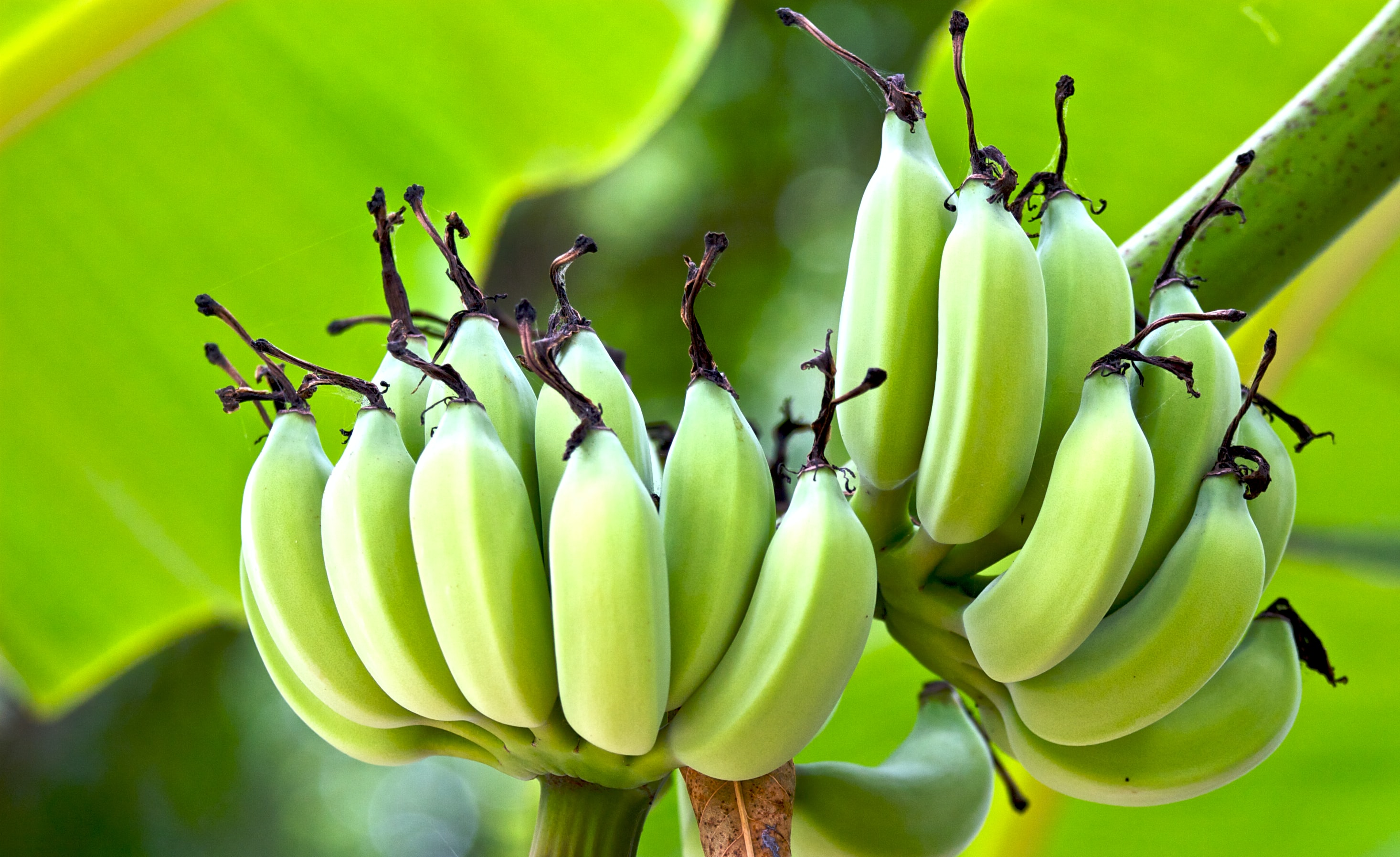 shallow focus photography of banana