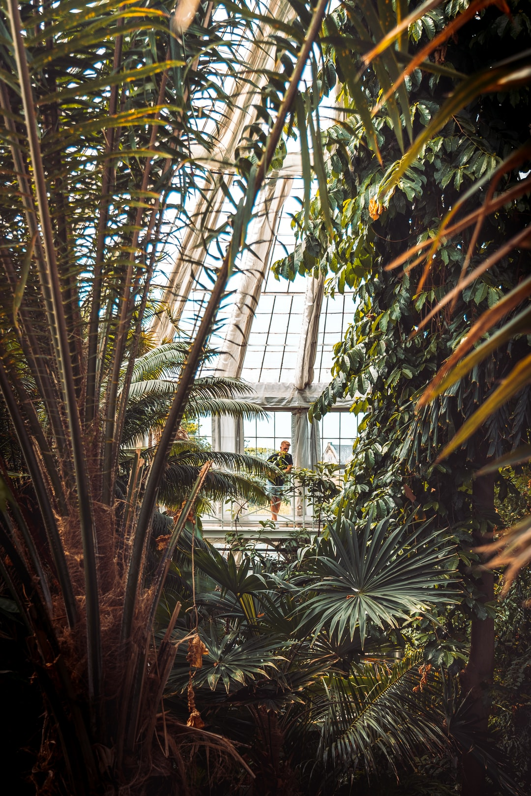 Despite battling with the hot, humid air at the very top of the greenhouse, this old balcony gives you a fantastic overlook of the various plants and palms in the exotic Palm House of the Copenhagen Botanical Garden.