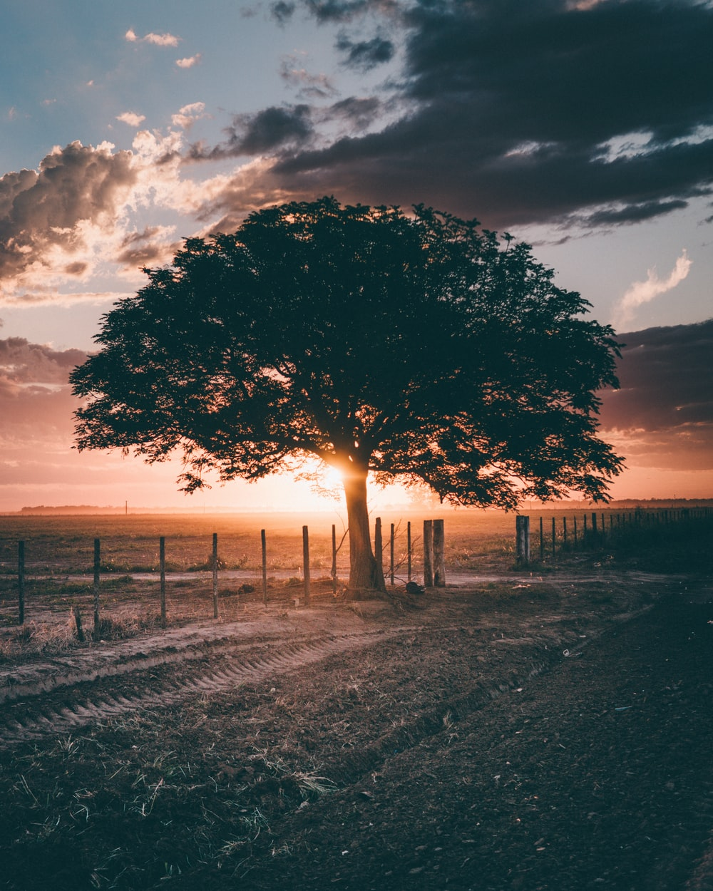 silhouette of tree during golden hour time