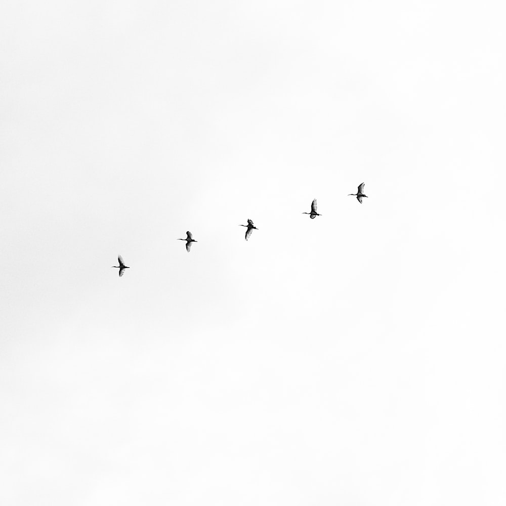 five black bird flying on sky
