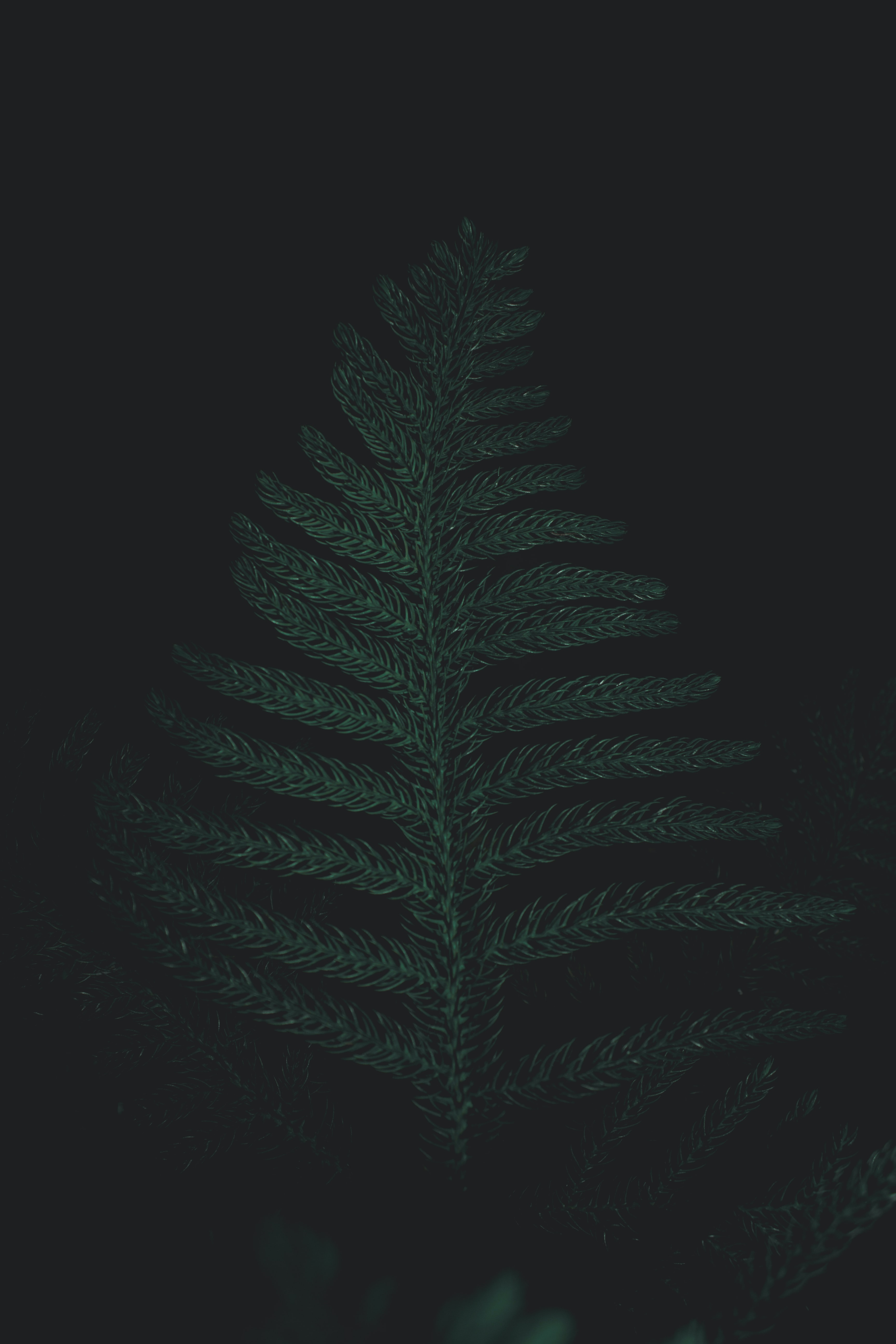 low light photography of green leafed tree